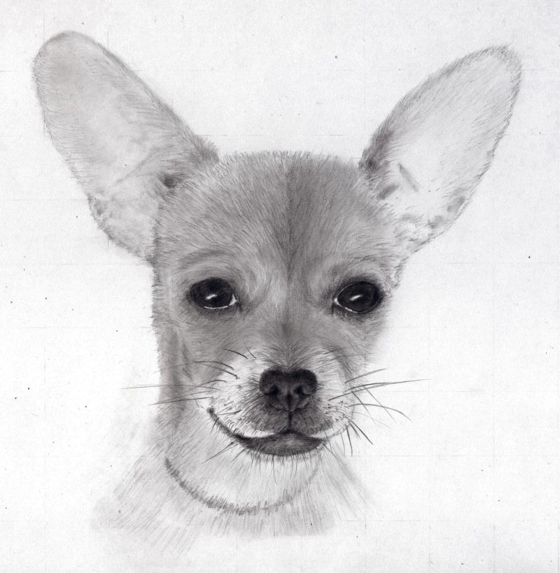 chien graphite